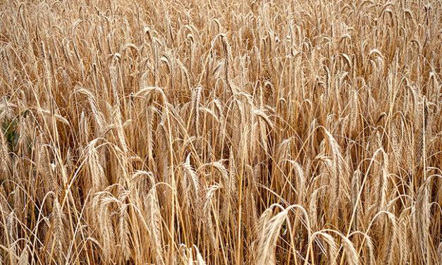 La GMAO au coeur de l'industrie agroalimentaire